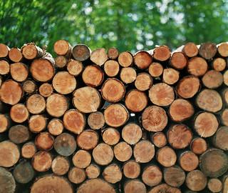 広葉樹と針葉樹 part2