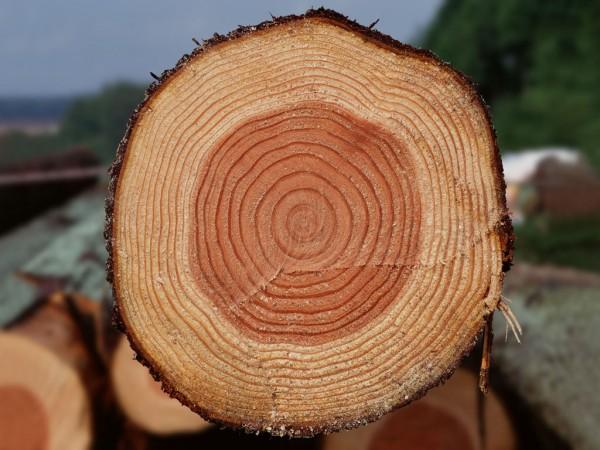 木の年輪について