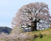 日本の国樹